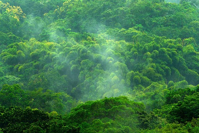 HELP Energy Drink Save the Amazon Rainforest